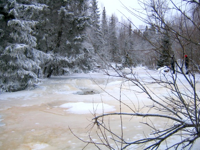 How do riparian plants even begin to survive a nordic winter?  Read our paper to find out!