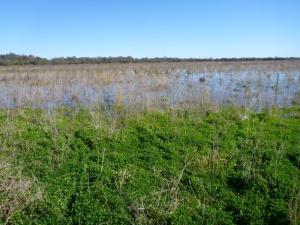 Dawson_wetlands2_May17