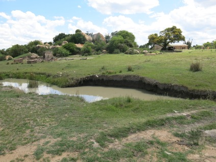 Matobo Hills wetland suffering from livestock overgrazing (Zim)